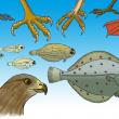 Illustrationer til 'Systematik - hvirveldyr' i serien 'ind i biologien' for Forlaget Alinea