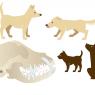 Illustrationer til Lotte Davies bog Sund hund - Politikens Forlag